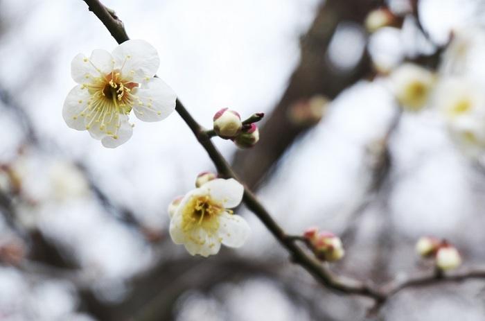 初春を告げる