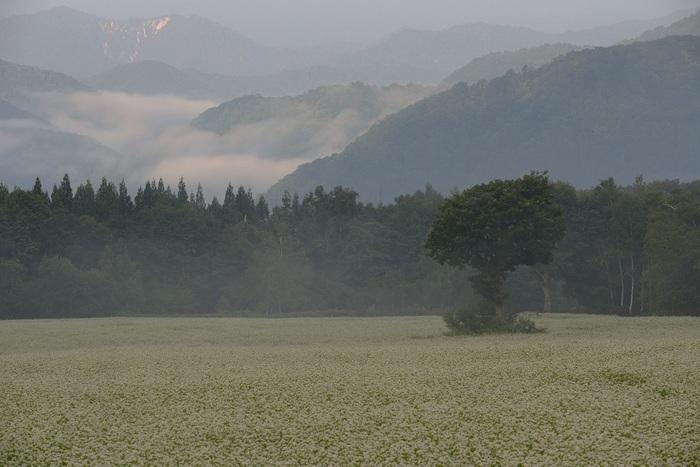 高原の白景