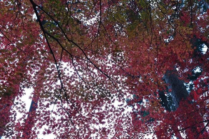 秋幕の彩り