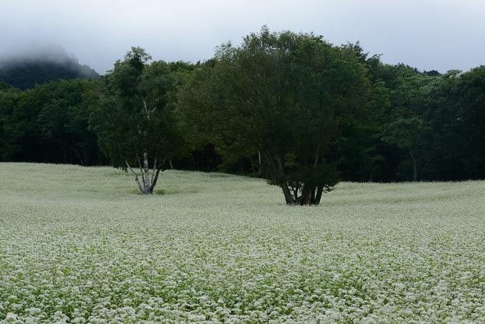 高原の白秋