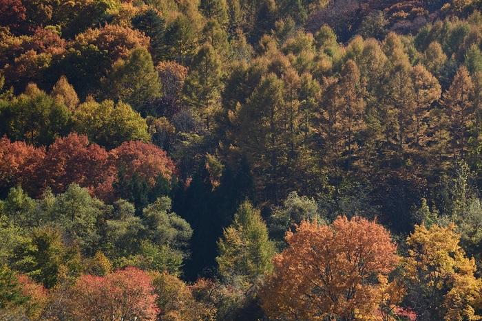 光受ける秋色
