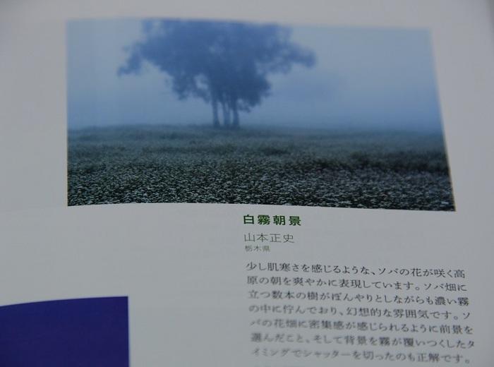 DSC_4437.jpg