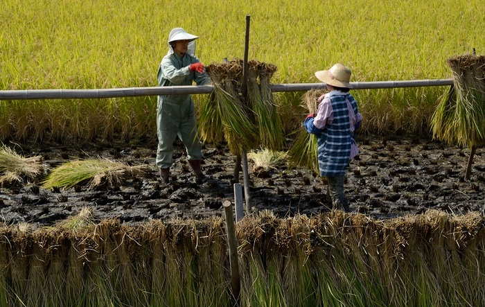 農家の期待
