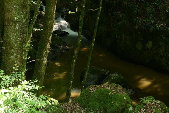 初夏渓の木漏れ日