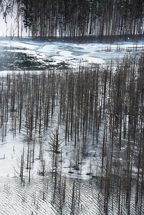 真冬の煌めき