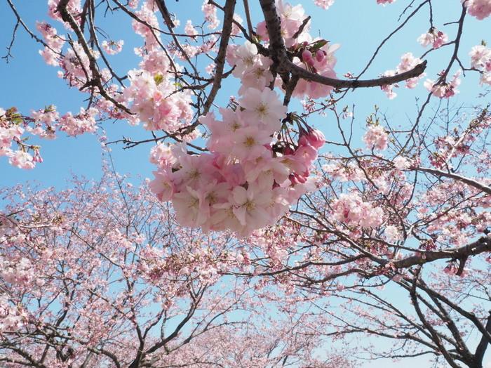 春風の精達